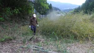 宅地の竹を伐採したばかり
