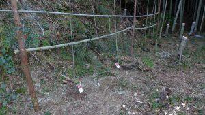 ベリー類の枝誘因のため棚を作った