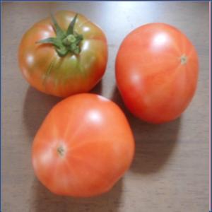 トマト約1kg