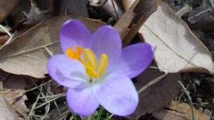 前庭東南の道側に咲いた花