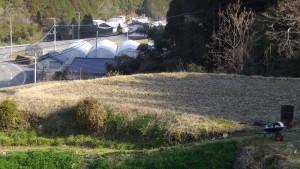 マイ農園の最初の畑にえん麦を撒いた