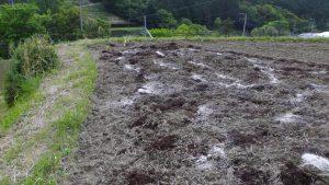 耕した後有機たい肥、有機苦土石灰、鶏糞を撒いた状況