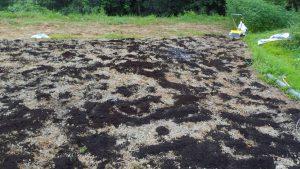 バークたい肥と有機石灰を巻いた後の畑