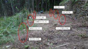 #7の畑に植えた果樹(梨、柿、サクランボ)