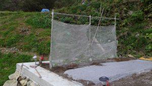 エンドウの苗に霜がかからないように不織布をかけておいた