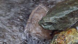 取水口とモルタルのおもしを谷に沈め石で固定